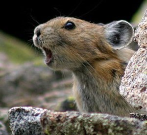 mouse-that-roared