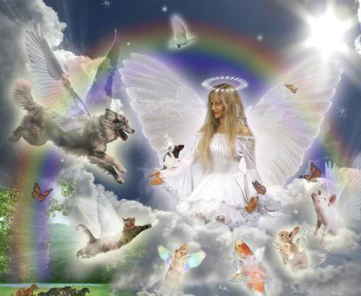 animals-heaven
